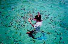 Swimming with the fishes