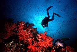 Diver in the deep with red cloral